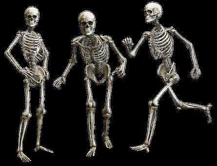 スケルトン, 人間, 骨, 頭蓋骨, 解剖学, 人間の骨格, 医学, 健康