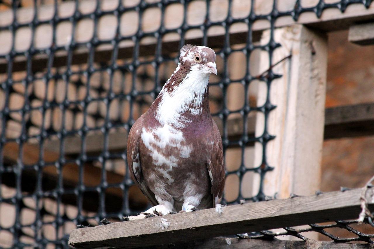 鸽子捕笼器-淘宝拼多多热销鸽子捕笼器货源拿货 - 阿里巴巴货源