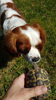 Animalia, Cute, Pet, Turtle, Amici