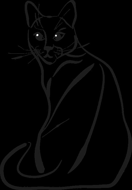 Gato Animales Dibujo Gráficos Vectoriales Gratis En Pixabay