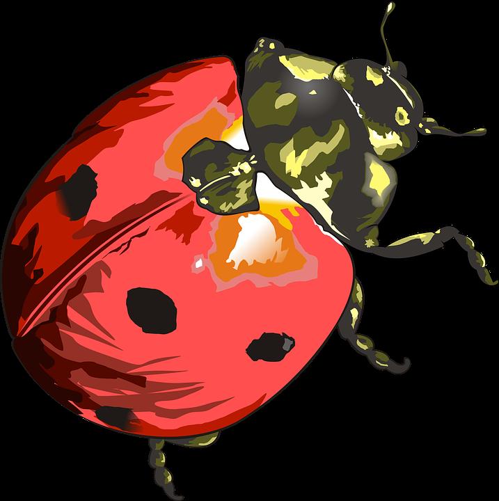 Beruska Hmyz Zahrada Obrazek Zdarma Na Pixabay