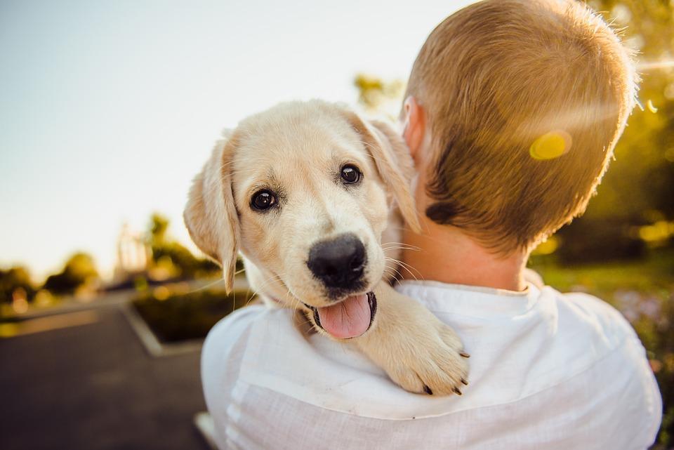 可爱, 长大了, 动物, 背景, 黑色, 繁殖, 布什, 狗, 欢闹的, 一天, 首