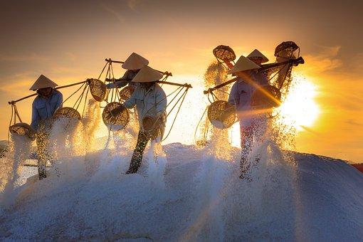 塩, フィールド, 州, ベトナム, 仕事, 日光, 労働者, ファーム, 朝