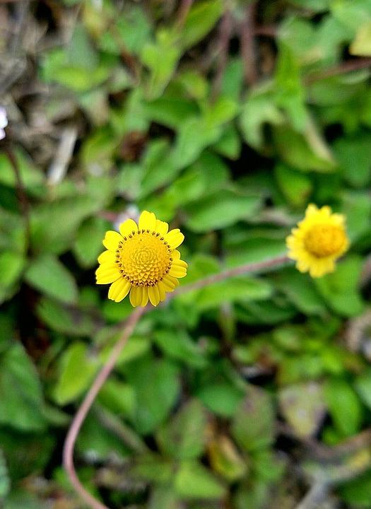 Tiny Yellow Flower Free Photo On Pixabay