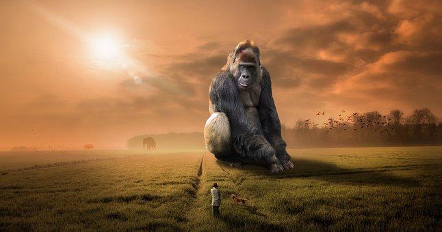 Animal, Gorilla, Ape, Primate, Herbivore