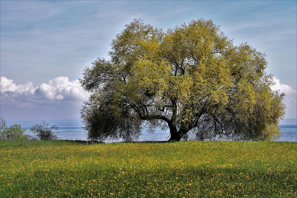 Tree, Nature, Lawn, Landscape, Sky, Idyllic
