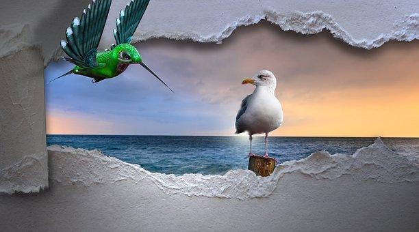 Racek, Kolibřík, Moře, Průlom, Pták