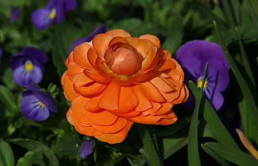 Flower, Plant, Garden, Nature, Orange