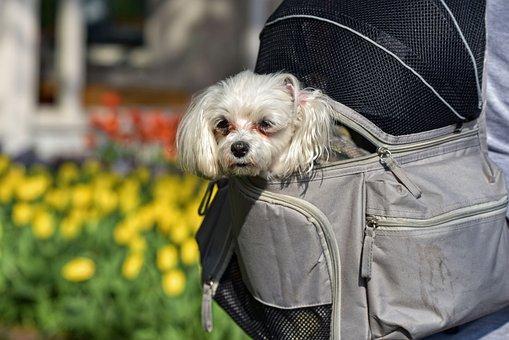 Little Dog, Dog, Animal, Mammal, Canine