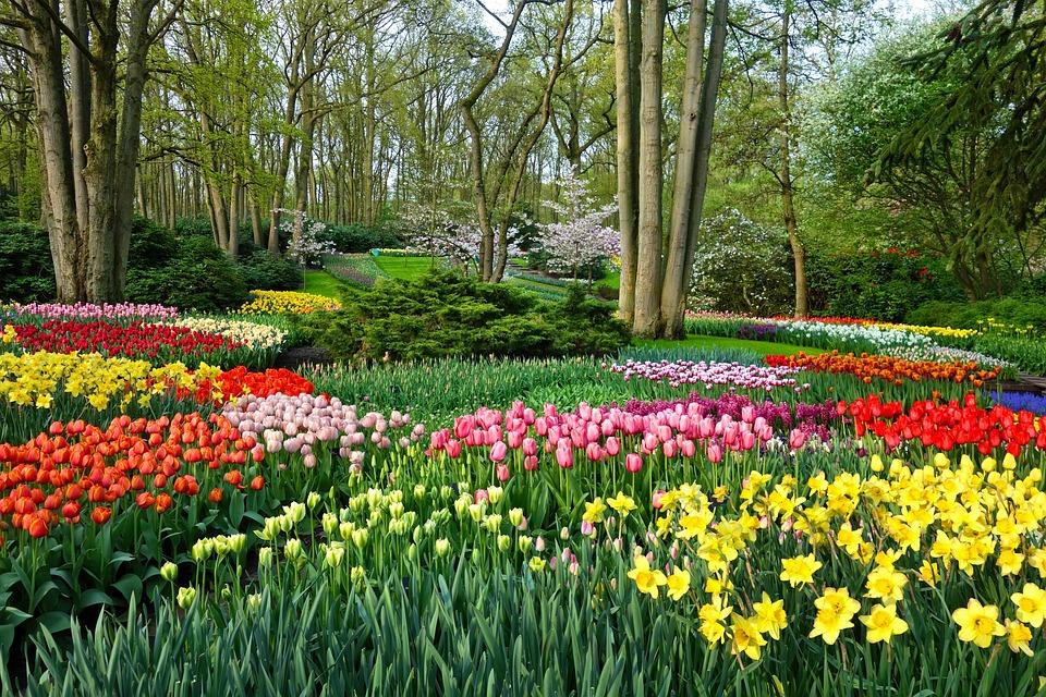 Garden Flower Garden Flower Bed Tulip Daffodil