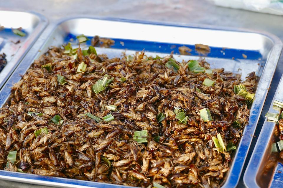 Insects in one of the Nagaland markets