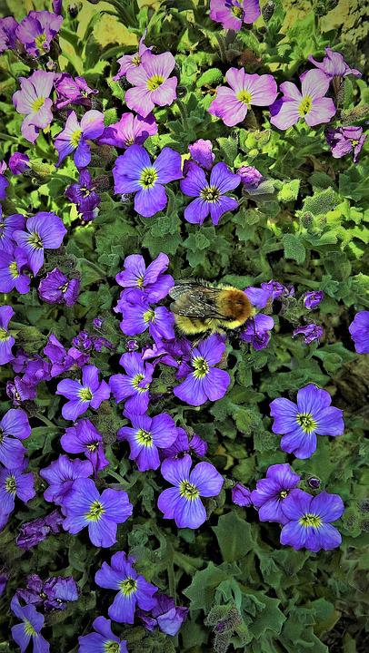 Flowers Blue Pillow Rock Garden   Free Photo On Pixabay