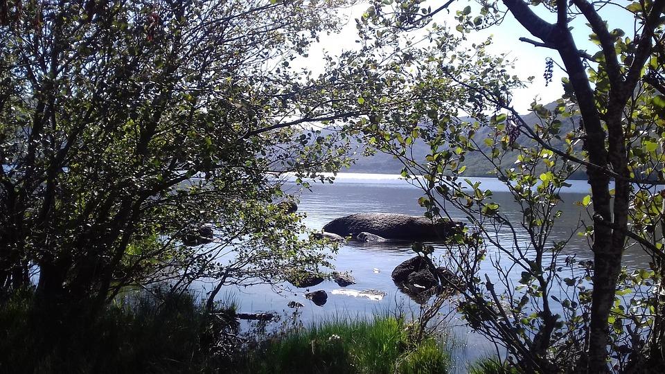 Árbol, Naturaleza, Paisaje, Madera, Al Aire Libre, Lago