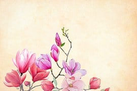 Flower, Magnolia, Watercolor