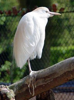Lil biele mláďatá veľké čierne vtáky nahé Dámske mačička