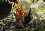 bird, nest, feed