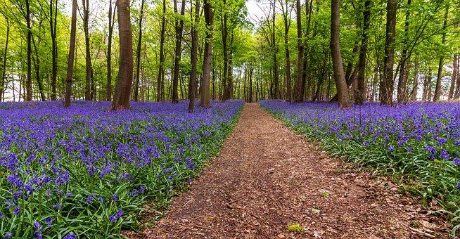 Nature, Flower, Landscape, Plant, Tree