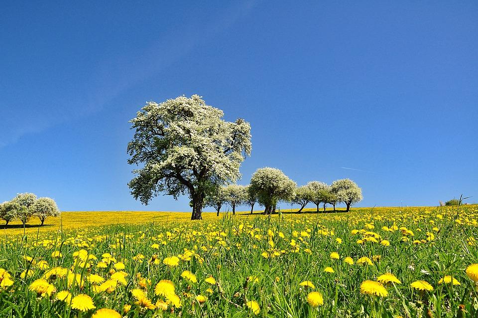 Nature Paysage Printemps Âge - Photo gratuite sur Pixabay