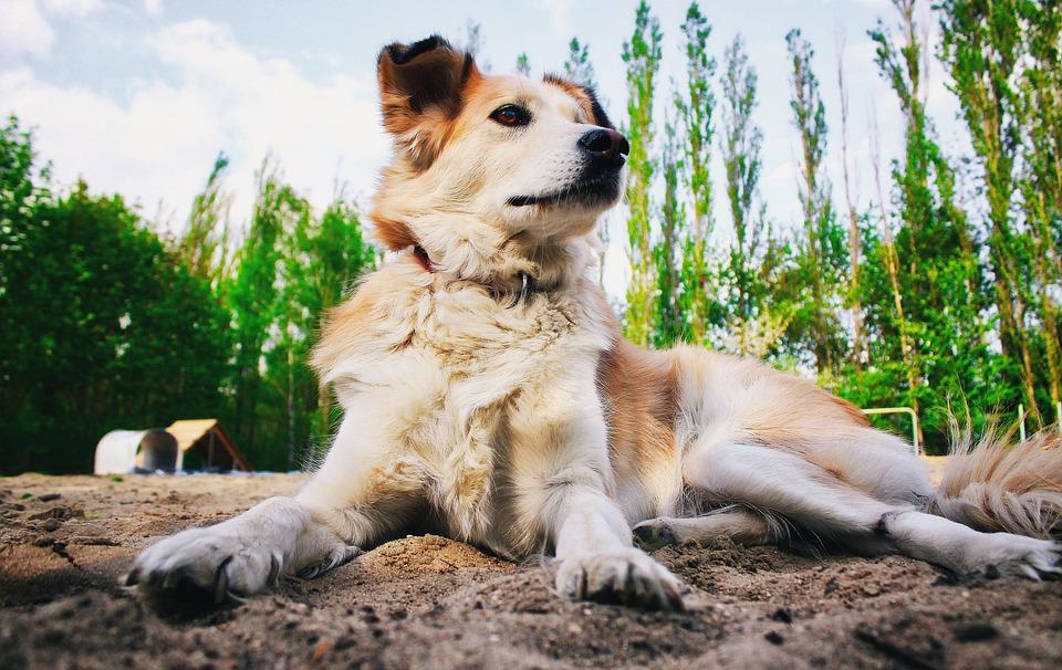 Natuur, Zoogdieren, Dieren, Bij Het Hof Van, Huisdieren