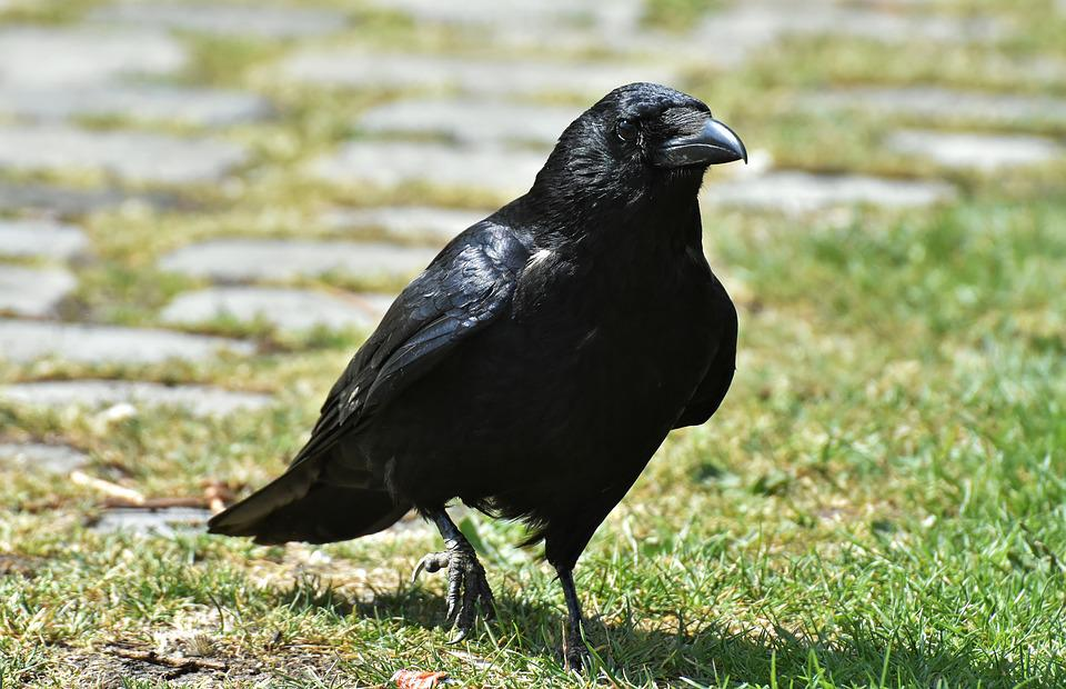 Velké černé ptáky blog
