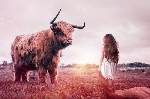 子, ブル, 牛肉, 家畜, 反すう動物, 牛, 戦う, 哺乳類, 自然, 動物