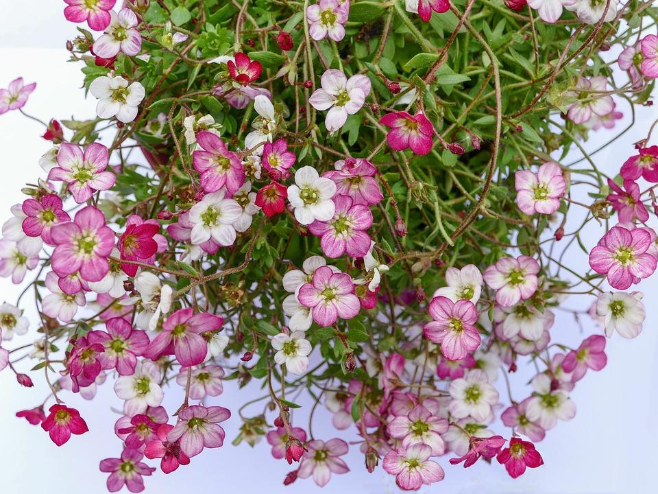 Climbing flowers mini free photo on pixabay climbing flowers mini flowers small flowers plant mightylinksfo