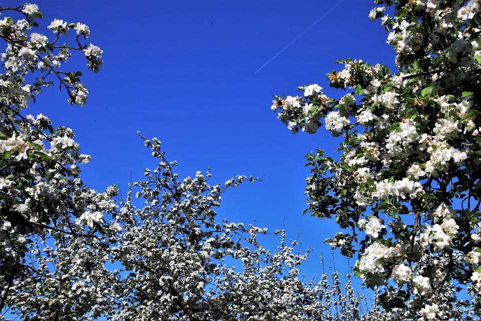 Spring, Sad, Fruit Trees, Tree, Season, Branch, Flower