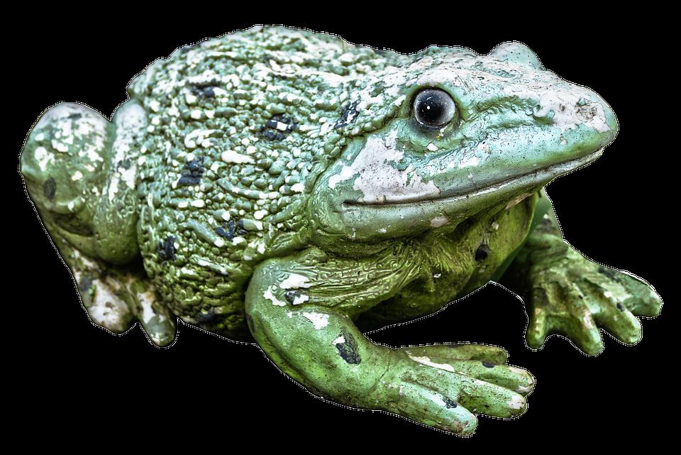 Katak Hijau Angka Foto Gratis Di Pixabay