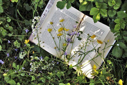 Reading, Plant, Nature, Leaf, Garden