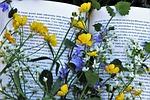czytam, kwiat, roślina