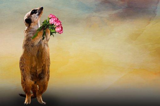 動物, ミーアキャット, 花束, ありがとう, グリーティング カード, 愛