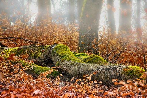 Autumn, Forest, Log, Moss, Leaf, Nature