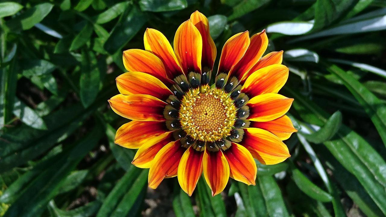 Показать фото цветов газания
