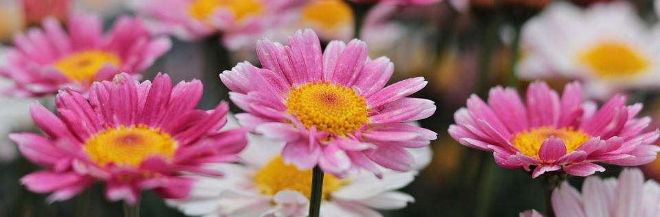 Natur, Pflanze, Blumen, Blüten, Sommer, Floral, Blühend