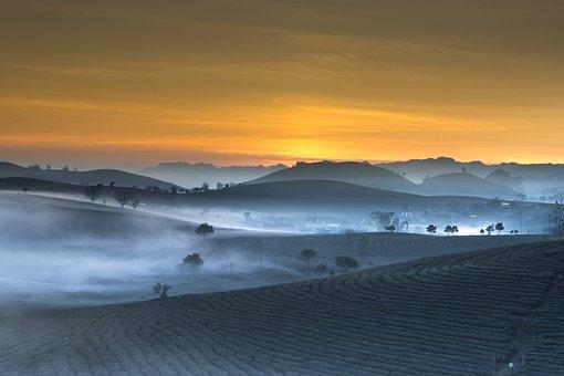 Tea Plantation, Landscape, Vietnam, Haze