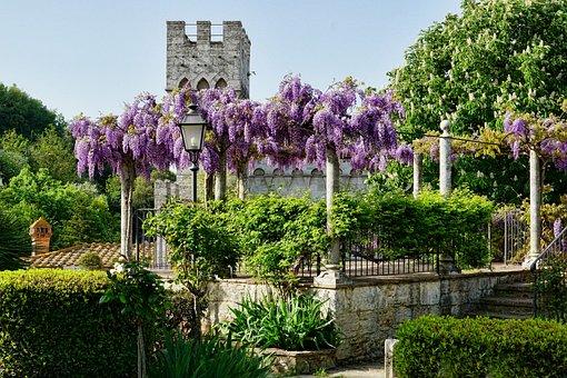 60 Kostenlose Blauregen Und Garten Bilder Pixabay