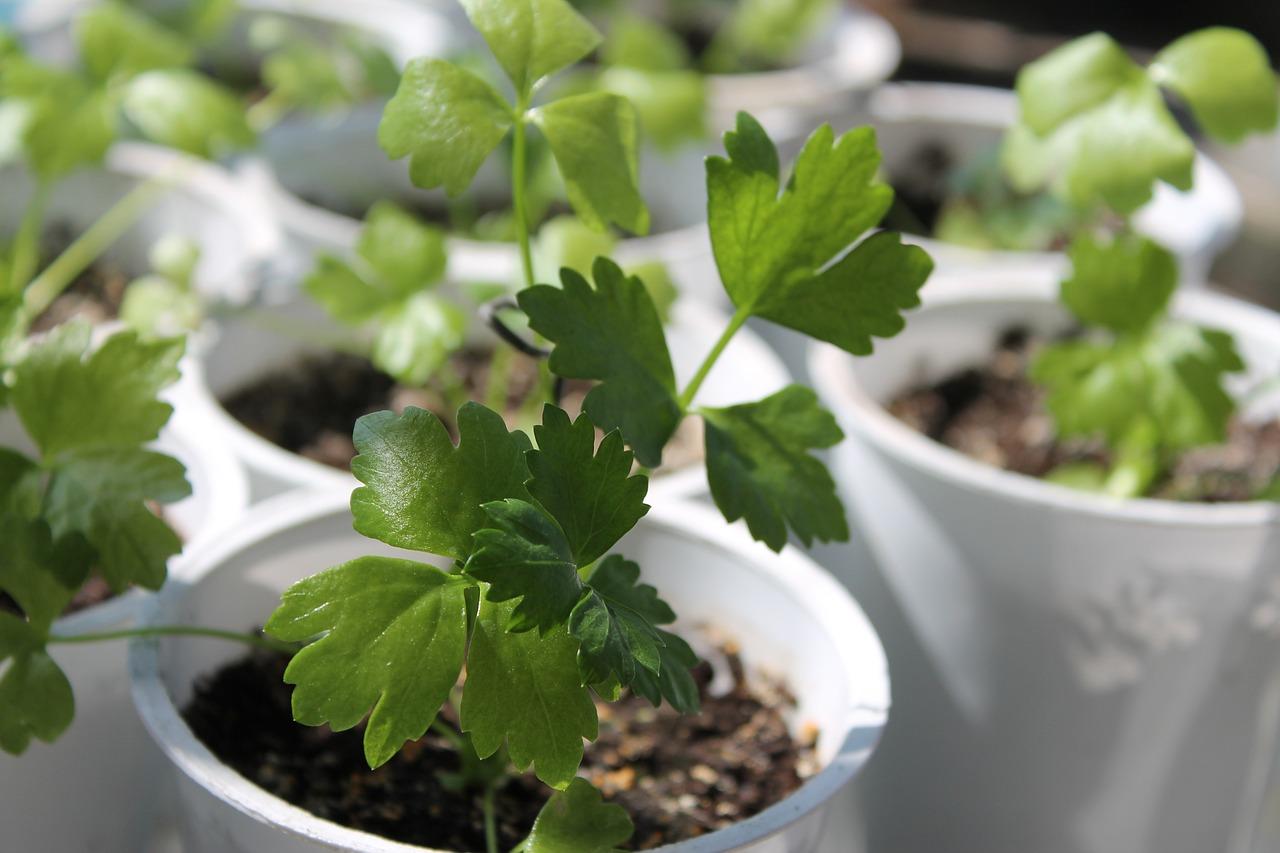 Лист Растение Трава - Бесплатное фото на Pixabay