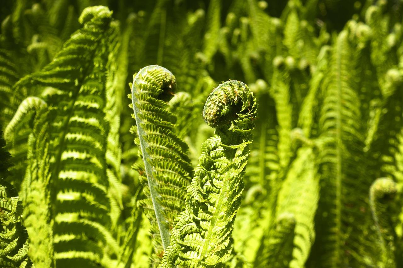 Красивоцветущие растения для сада фото и названия кусты