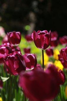 Natureza, Plantas, Flores, Verão, Folha