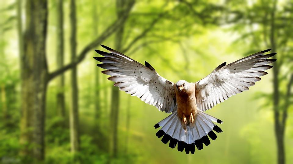 foto de Fond D'Écran Oiseau Nature La - Photo gratuite sur Pixabay