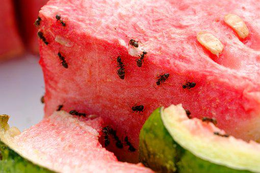 Melon, Watermelon, Eat, Fruit, Pulp
