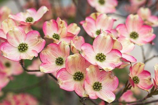 Flower, Nature, Flora, Blooming, Petal