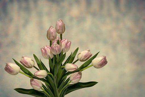 download free flowers
