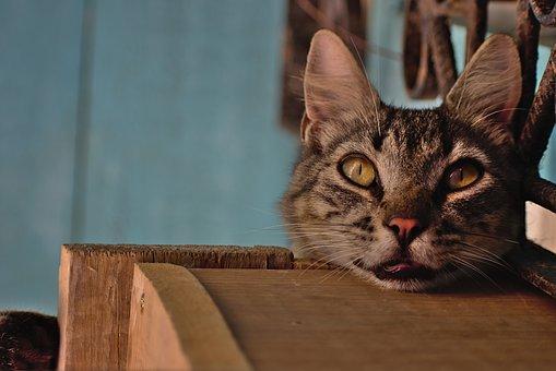 mačička striekať videoklipy