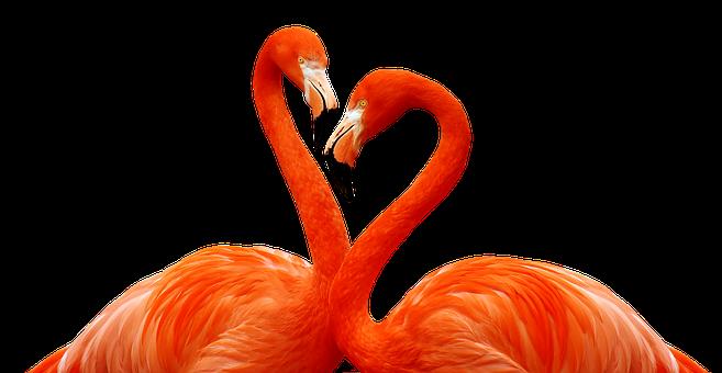 300 Free Bird Of Paradise Exotic Images Pixabay