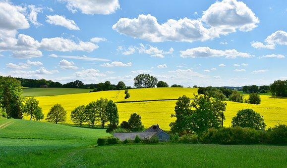 Landscape, Nature, Oilseed Rape, Field