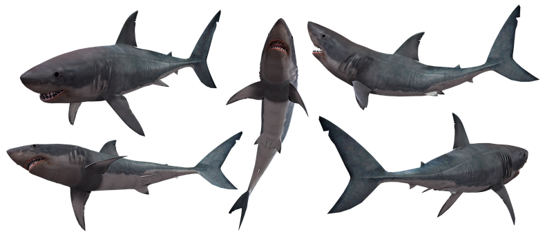 Shark, Sharks, Jaws, Great, White