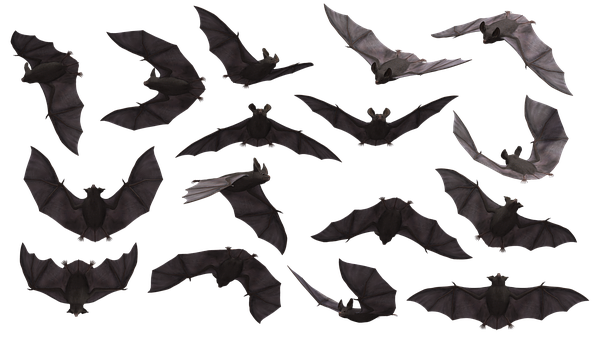 De 5 000 Photos Et Images D Halloween Pixabay