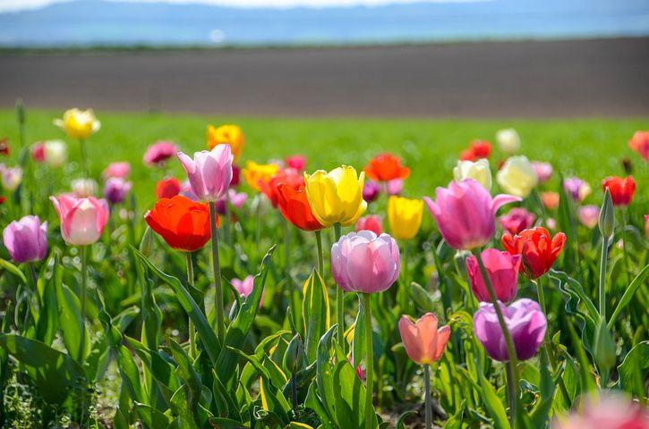 фото цветы весна в полях другими растениями роль