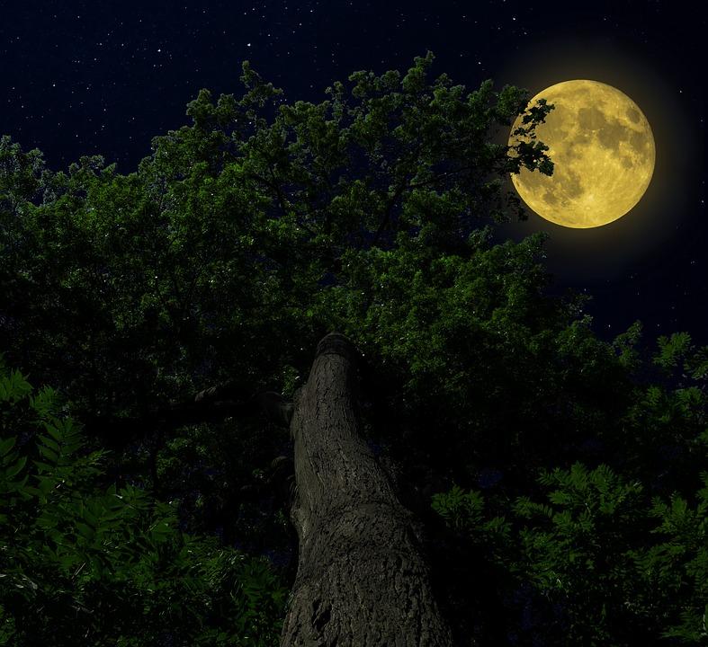 Natur, Wald, Baum Mond, Himmel, Licht, Nacht, Mondlicht